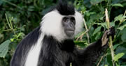 10 Day Rwanda gorilla expedition